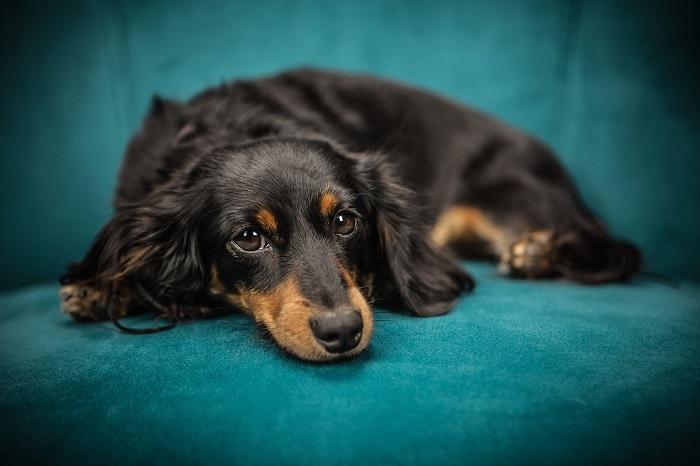 Zelený pelech pre psa